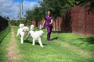 sugar land animal hospital walking dog