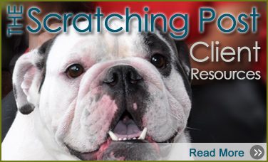Lake Olympia Animal Hospital | The Scratching Post