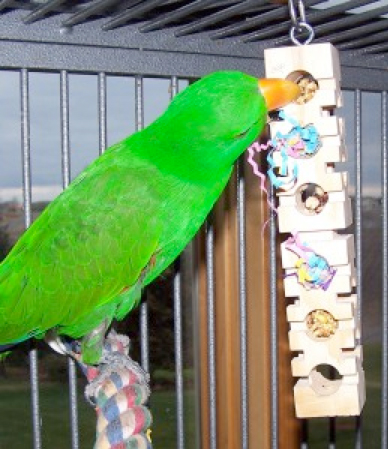 Parrot Foraging