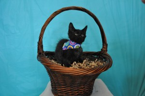 boy black kitten in basket
