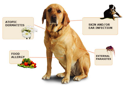 Allergies in Dogs and Cats