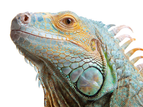 Household Dangers for Exotic Pets - LOAH