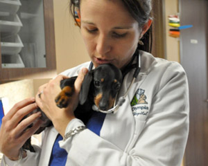 Sugar Land Veterinarians