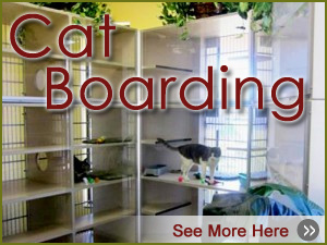 Lake Olympia Animal Hospital | Boarding