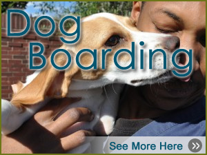 Lake Olympia Animal Hospital | Boarding Dog