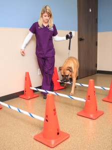 Lake Olympia Animal Hospital | Rehab