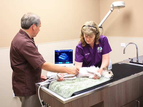 Lake Olympia Animal Hospital | Ultrasound